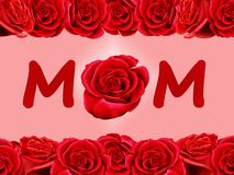 Birthday card to mum with a red rose. Birthday card to mum with a single red rose  on a pink background Stock Photos