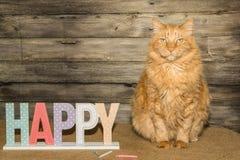 Birthday Cat Stock Photo