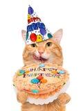 Birthday cat . Stock Photography
