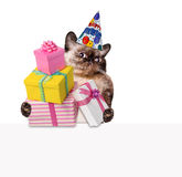 Birthday cat . Stock Image