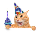Birthday cat . Stock Photos
