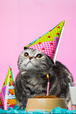 Birthday cats. On a pink background Stock Images