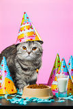 Birthday cats Stock Image
