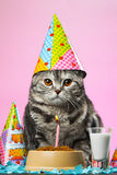 Birthday cats. On a pink background Royalty Free Stock Photos