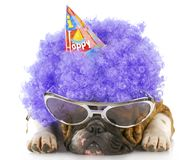 Birthday dog Stock Photography