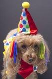 Birthday Dog Stock Photography