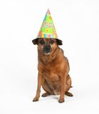 Birthday dog Stock Image