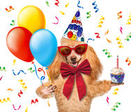 Birthday dog with balloons and a cupcake. On a white background Stock Photos