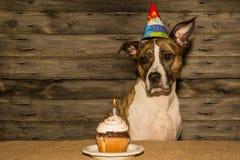 Birthday Dog Royalty Free Stock Images