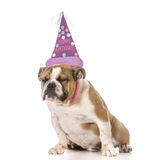 Birthday dog Royalty Free Stock Photography
