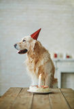 Birthday of dog Stock Photo