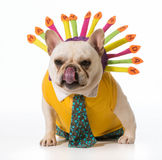 Birthday dog Stock Images