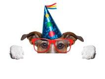 Birthday dog. Hiding behind blank banner Royalty Free Stock Photo