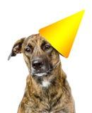 Birthday dog. isolated on white background Royalty Free Stock Photography