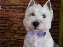 Birthday dog Royalty Free Stock Photography