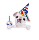 Birthday dog . Over white banner. Isolated on white Stock Photography