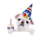 Birthday dog . Over white banner. Isolated on white Royalty Free Stock Image