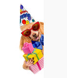 Birthday dog with presents. Royalty Free Stock Photos