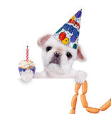 Birthday dog with sausages . stock images