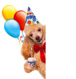 Birthday dog Stock Photo