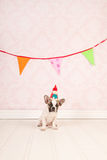 Birthday doggy Stock Photo