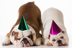 Birthday dogs Royalty Free Stock Images