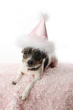 Birthday girl doggy Royalty Free Stock Photo