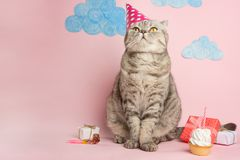 Birthday greetings from a cat.  royalty free stock photography