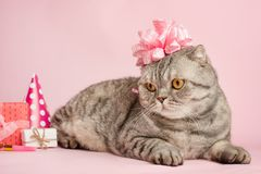 Birthday greetings from a cat.  royalty free stock images