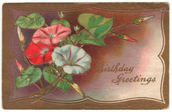 Birthday Greetings Morning Glory Vintage Postcard stock illustration