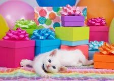 Birthday kitten royalty free stock image
