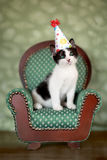 Birthday Kitten Sitting in a Chair. Cute Kitten in a Chair With Birthday Party Hat Royalty Free Stock Photos