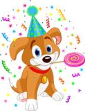 Birthday puppy Royalty Free Stock Photos