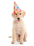 Birthday Puppy Stock Photos