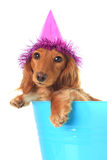 Birthday puppy Stock Photo