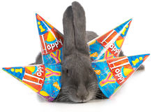 Birthday rabbit Royalty Free Stock Photography