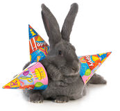 Birthday rabbit Royalty Free Stock Image