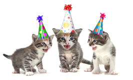 Birthday Song Singing Kittens on White Background Royalty Free Stock Photos