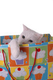 Birthday Surprise. A cute blue and yellow-eyed cat climbing out of a gift bag royalty free stock photography