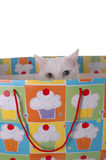 Birthday Surprise 2. An adorable blue and yellow eyed cat peering out of a gift bag Stock Photo