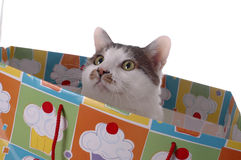 Birthday Surprise 3. An adorable cat in a gift bag stock images