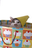 Birthday Surprise 6. An adorable cat with a birthday hat. The cat is sitting in a gift bag royalty free stock image