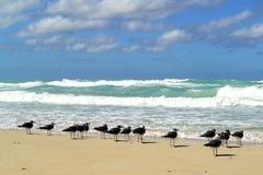 Birts na praia Varadero, Cuba imagens de stock
