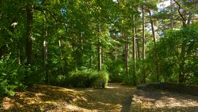 Biruta Park in Palanga. One of the oldest and most popular botan. Ical gardens in Europe and Lithuania has nautral coastal vegetation Royalty Free Stock Photography