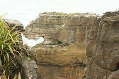 Bisarrt vagga bildat av erosion Punakaiki, den nyazeeländska södra ön fotografering för bildbyråer