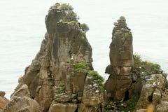 Bisarrt vagga bildat av erosion Punakaiki, den nyazeeländska södra ön arkivbilder