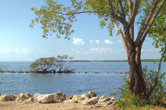 Biscayne National Park - 3. View of a the ocean and Buttonwood tree in Biscayne National Park stock images