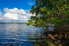 Biscayne National Park. Beautiful Biscayne National Park vista from Black Creek Trail royalty free stock photography