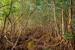 Biscayne National Park. Beautiful Biscayne National Park vista from Black Creek Trail with a mangrove preserve royalty free stock photography