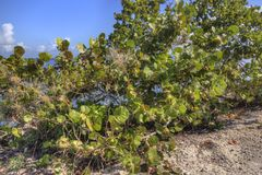 Biscayne nationalpark, södra Florida royaltyfri foto